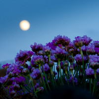 The Flower Moon, May's Full Moon